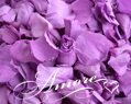 Violet Wisteria Freeze Dried Rose Petals Wedding Small Case 8 cups