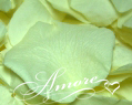 Light Green Pistachio Freeze Dried Rose Petals Wedding Ultimate Case 224 cups