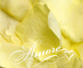 Light Yellow Freeze Dried Rose Petals Wedding Ultimate Case 224 cups
