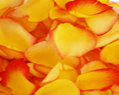 Yellow Red Fresh Rose Petals Wedding 6000