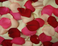 Valentine Mix Fresh Rose Petals Wedding 6000