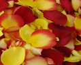 Yellow and Red Fresh Rose Petals Wedding 4000