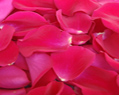 Hot Pink Watermelon Fresh Rose Petals Wedding 500