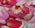 Pinky Blend Fresh Rose Petals Wedding 500