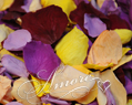 Tropical Mix Freeze Dried Rose Petals Wedding Large Case 64 cups