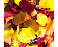 Fall Mix Freeze Dried Rose Petals Wedding Small Case 8 cups